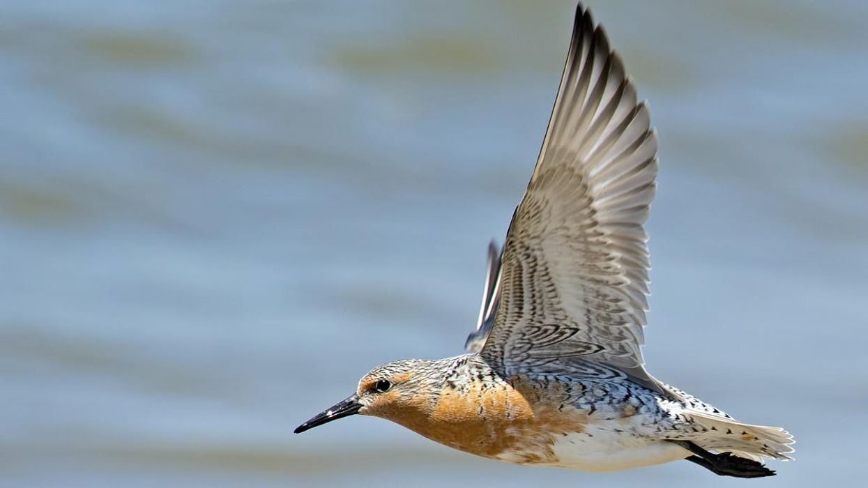 Scientists Are Tracking Mysterious Migratory Bird Journeys in Northwest Mexico