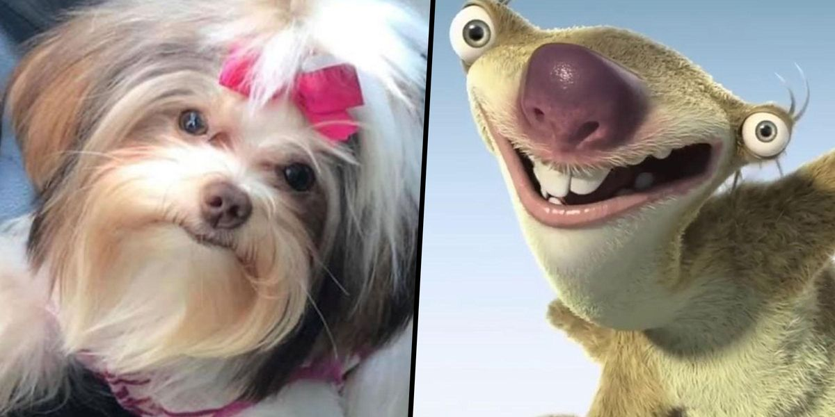 Man Tells Groomer 'Count Your Days' as Dog Transforms Into 'Sid From Ice Age'