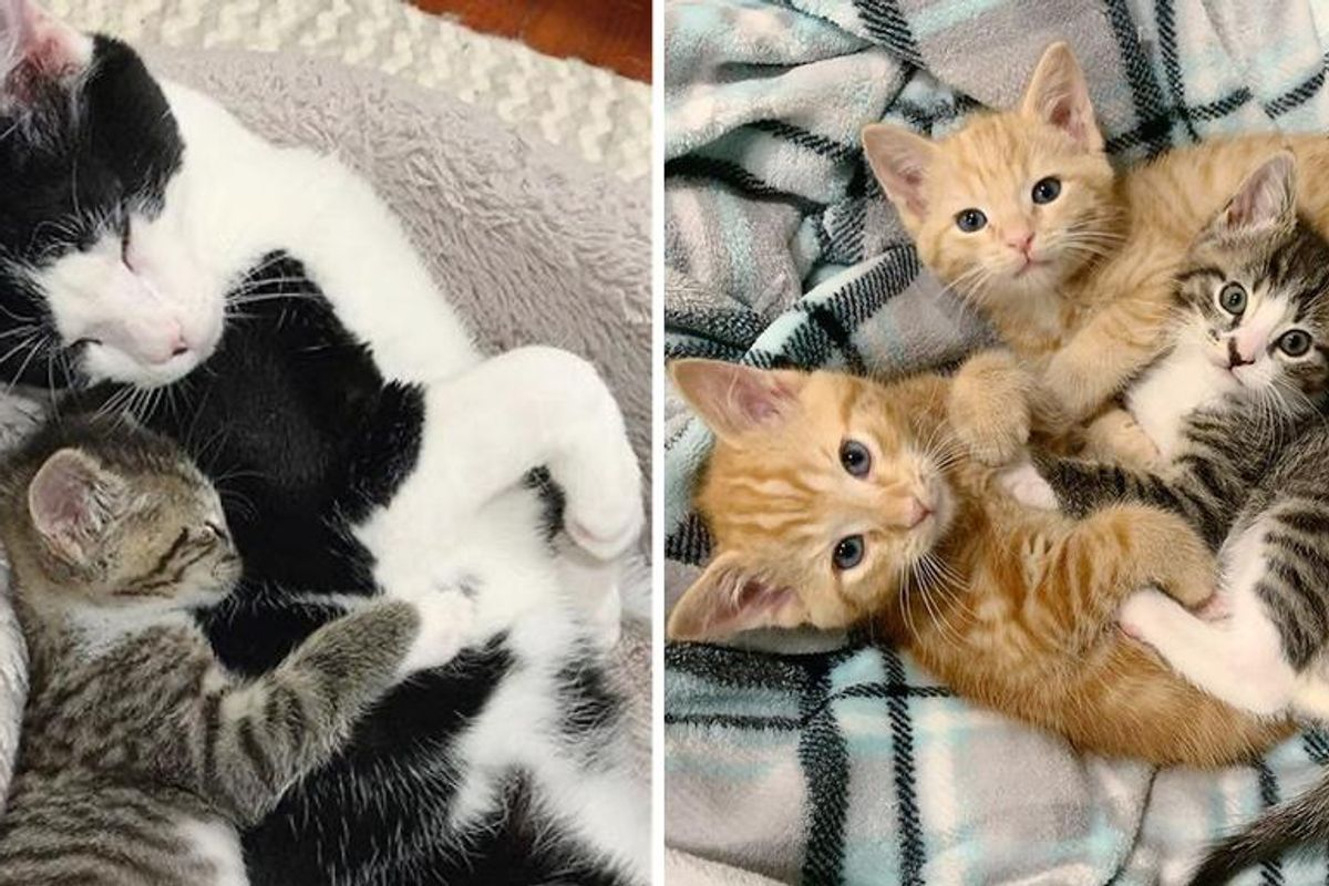 Kitten Makes Great Strides with Help from Other Cats After Being Found as Orphan