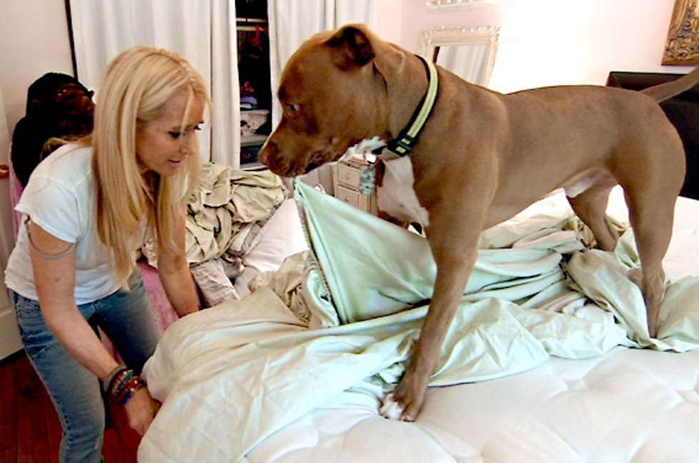 Ten Observations On the Season 4 Premiere of Real Housewives of Beverly Hills