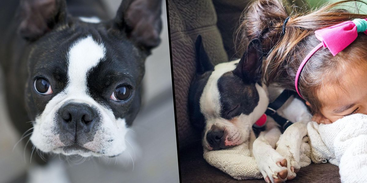 Dog Owner Tried to Return Puppy to Rescue Centre as 'It Didn't Match Sofa'