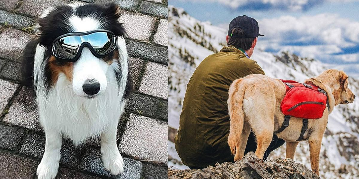 37 Problem-Solving Products For Every Pet Owner