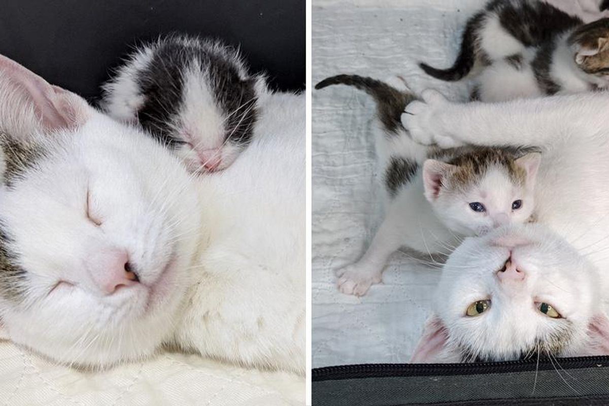 Cat Beaming with Joy When She Finds Perfect Family to Help Her Kittens Thrive