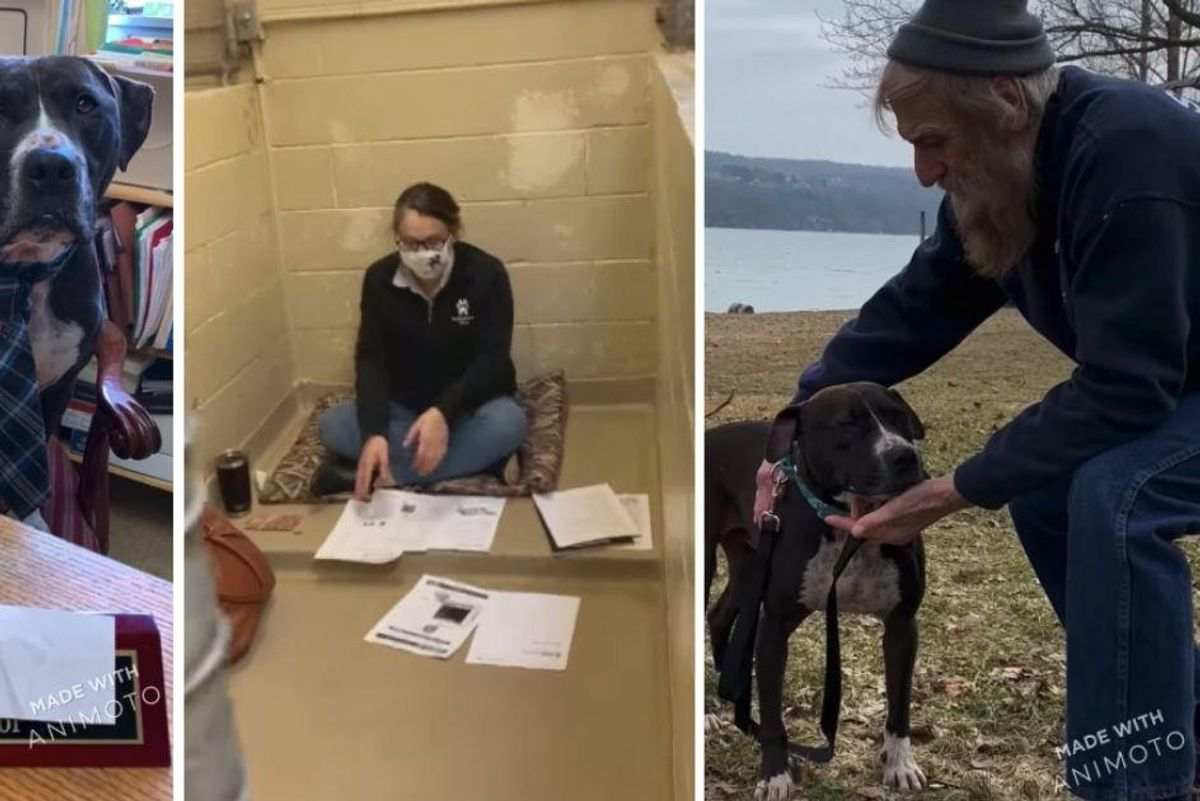 Rescue dog finally lands 'forever home' after swapping places with shelter director