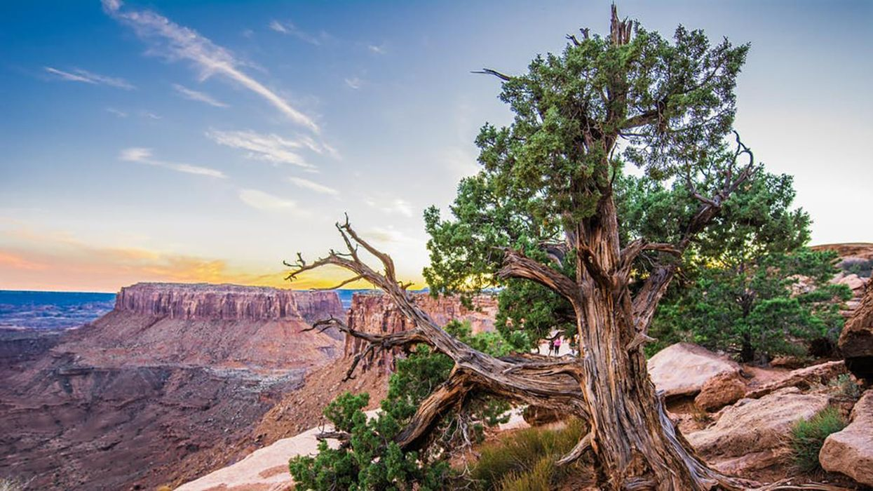 11 Surprising Facts About Trees