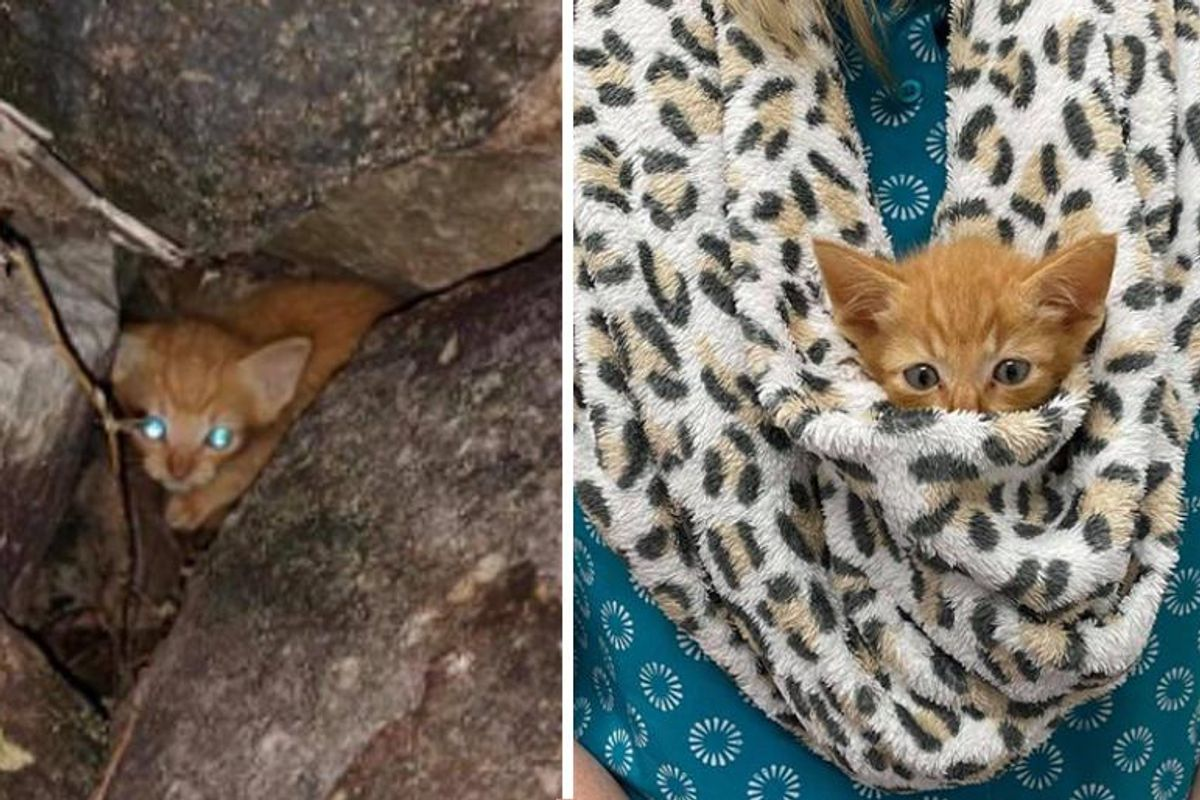 Kitten Found Hiding in Rocks by Passerby Turns Out to Be the Sweetest Little Guy