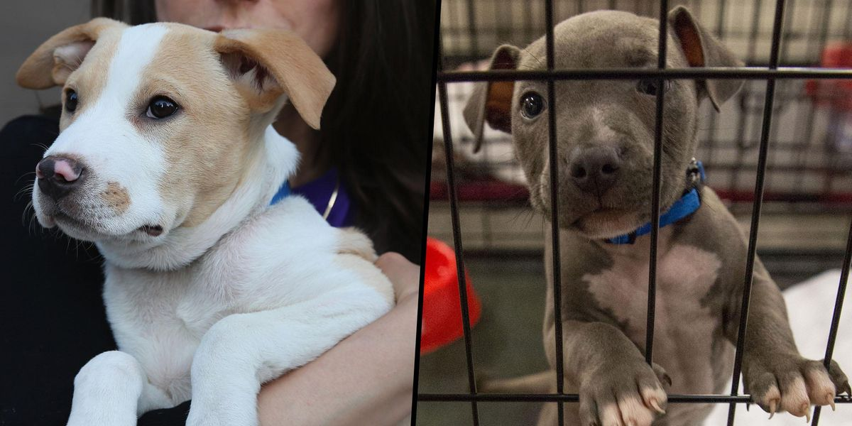 Los Angeles Officially Recognized As a 'No-Kill' City for Animal Shelters