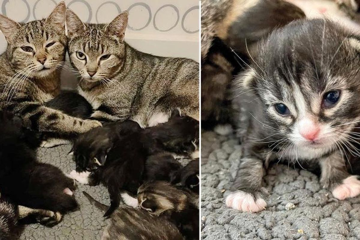 Pregnant Cats Found Wandering the Streets Together, Decide to Raise Their Kittens as One Big Family