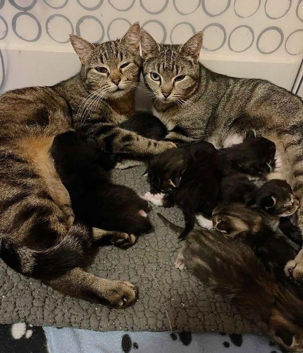 cat moms, kittens, nursing, raise kittens