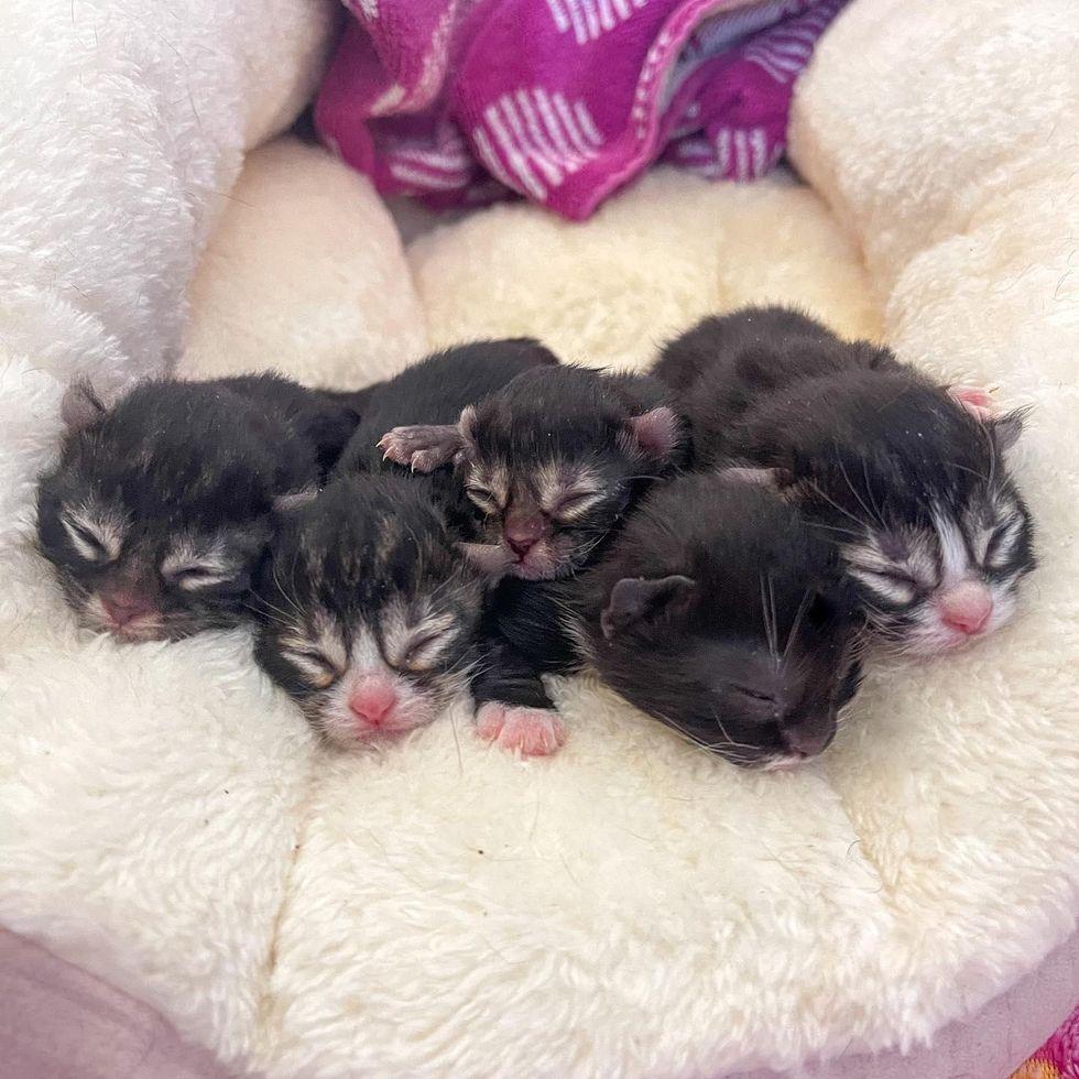 Baby kittens, newborn kittens