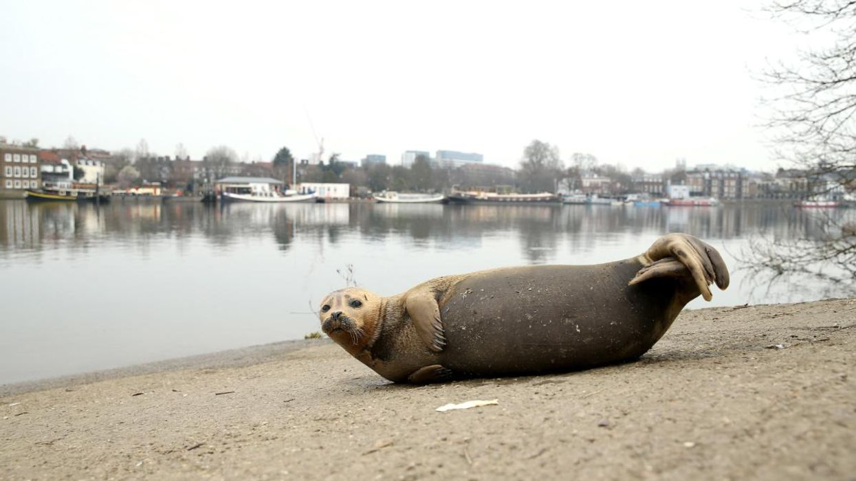 London Seal Attack Highlights Importance of Respecting Wildlife