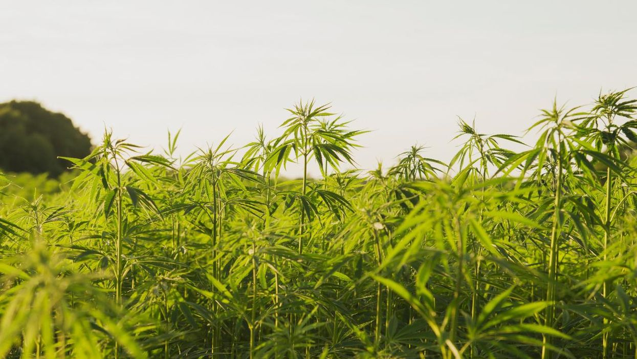 10 Things You Didn't Know About Sustainable Hemp Farming