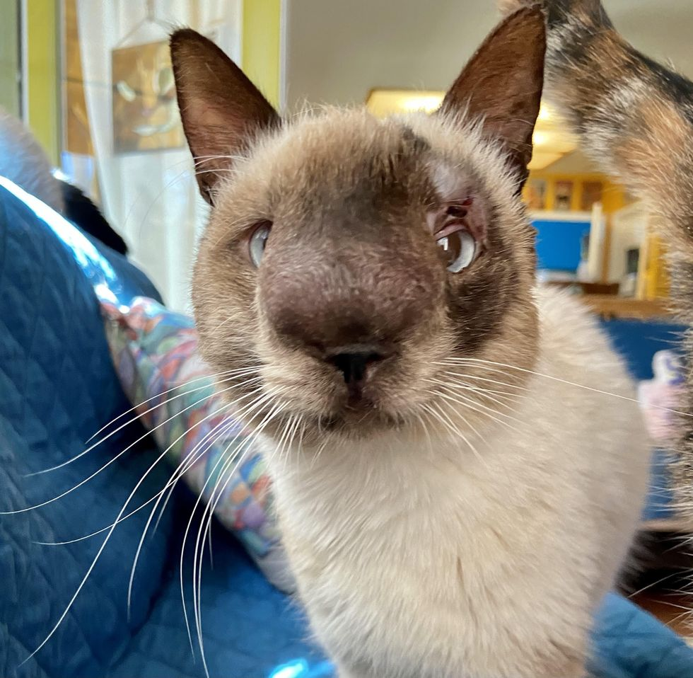 khy, cat, special needs, nose, sweet face