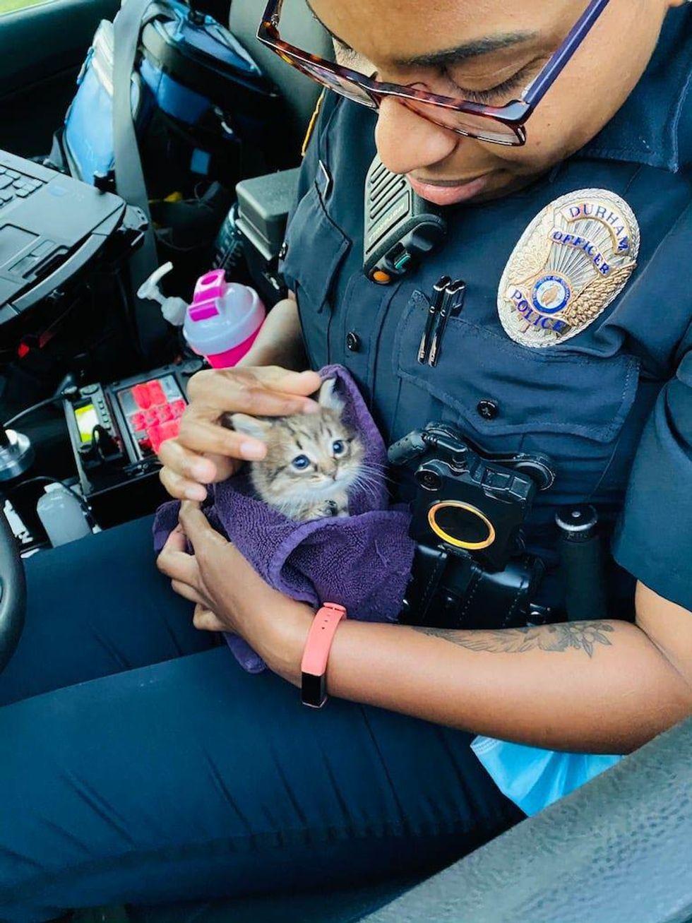 Kittens, cop, durham, rescue, strays