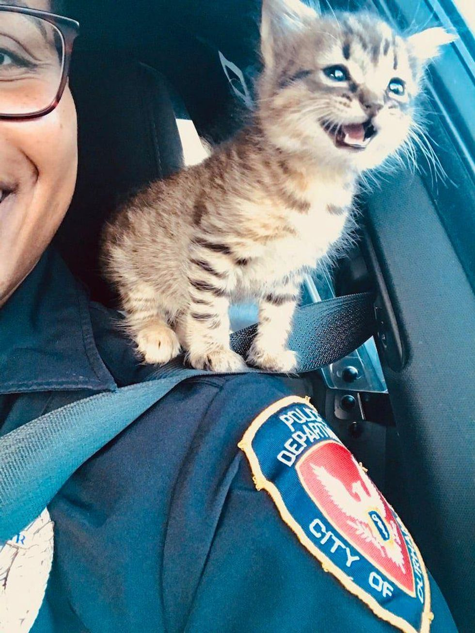 Kitten, cop, durham, rescue, shoulder cat