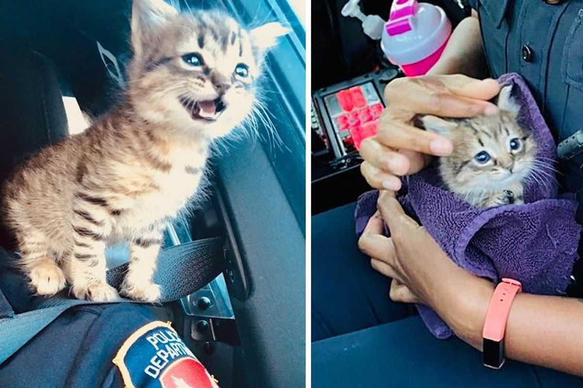 Stray Kitten Sneaks His Way into Officer's Heart and Claims His Spot as Her Shoulder Cat