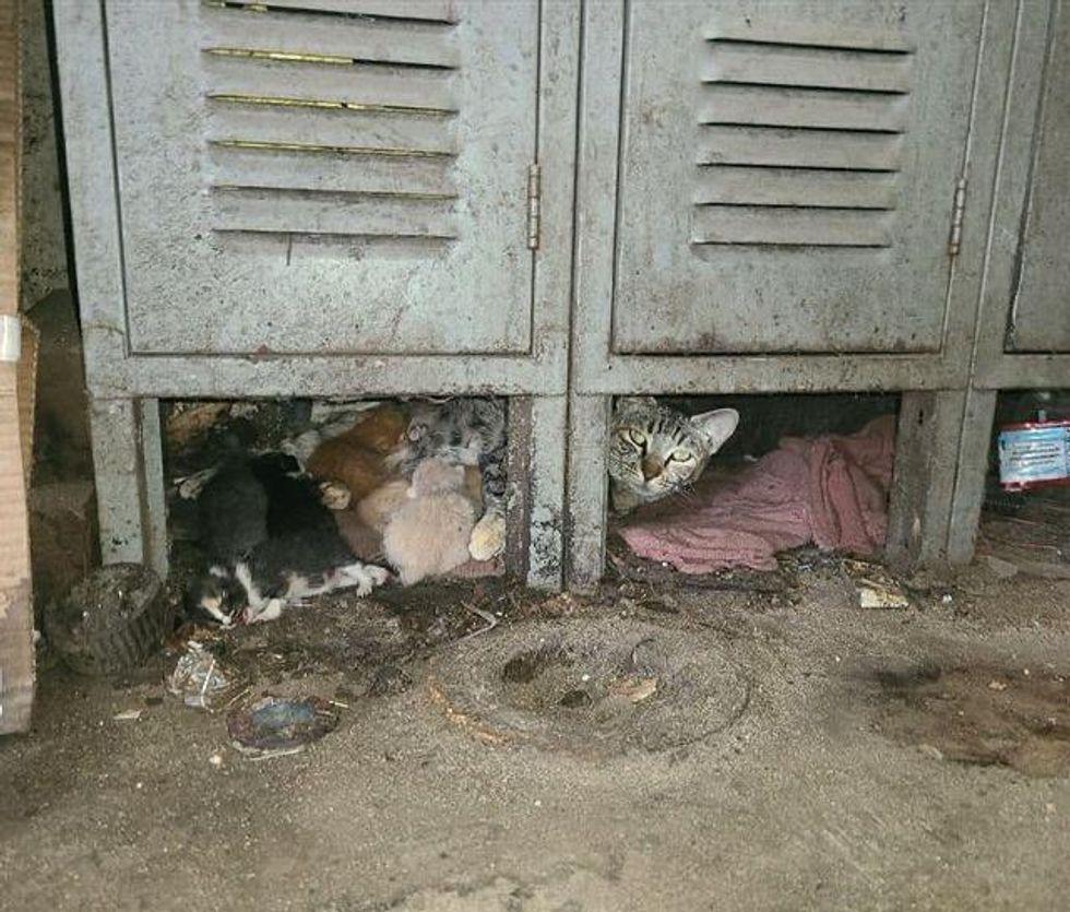 warehouse cat, mouser, kittens, mom cat