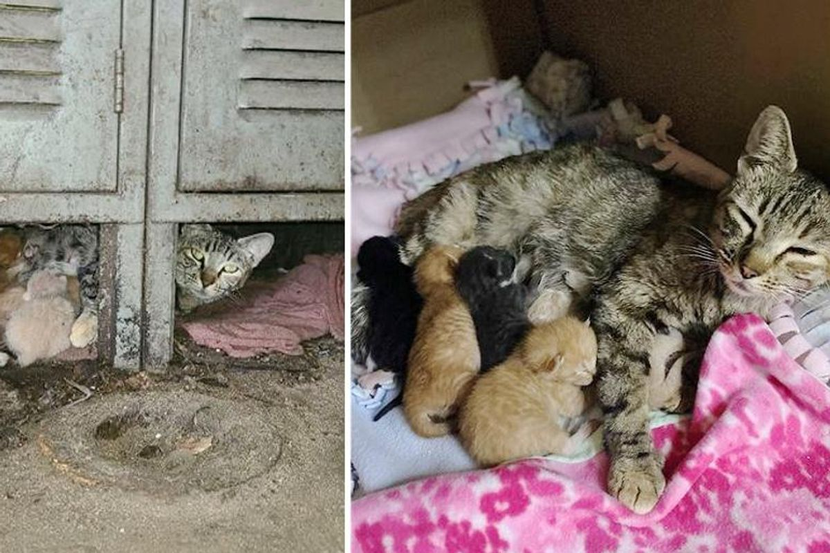 Man Took Over Warehouse and Discovered It Came with Cats and Kittens That Needed Help
