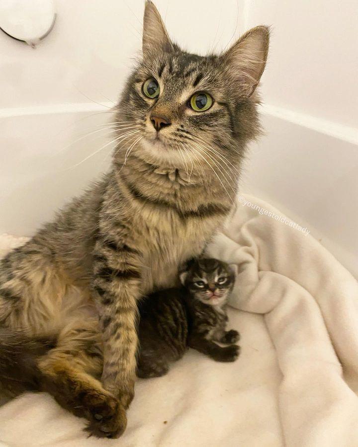 mamá gato, solo gatito, atigrado, escarlata, explorador