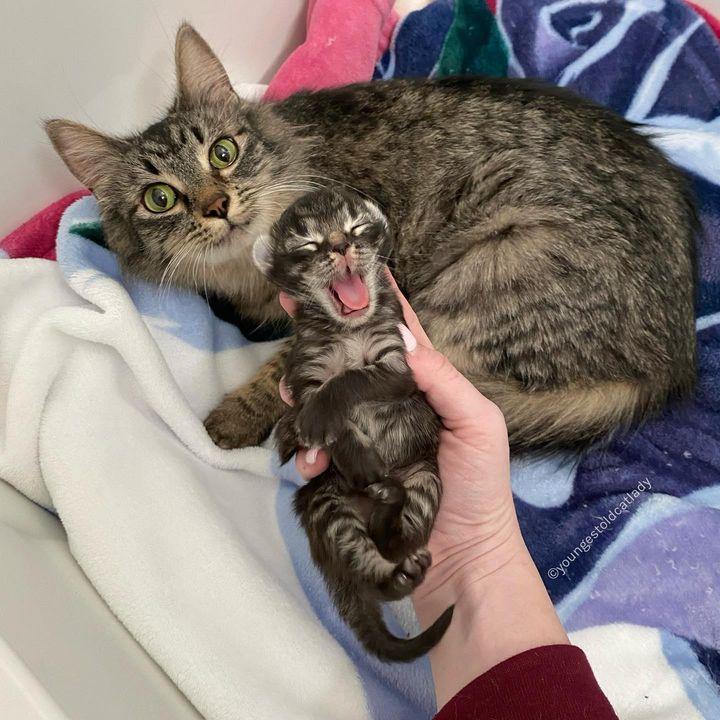 mamá gato, gatito, mini yo, solo gatito