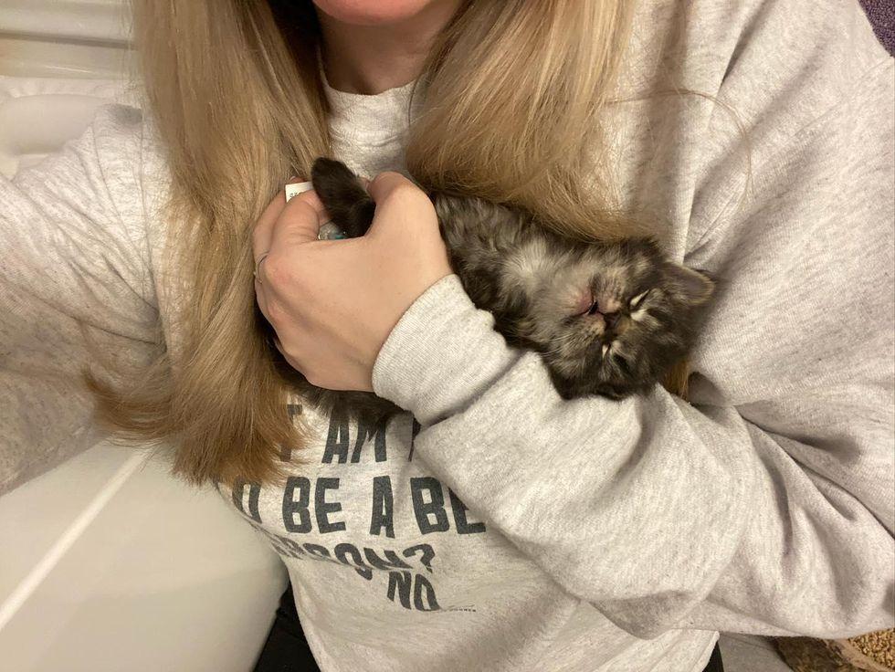 cute kitten, sleepy, boy scout