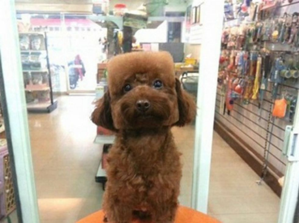 Afternoon Cute: Geometrically-Groomed Dogs