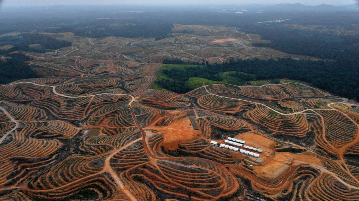 New Report Finds Indonesian Forestry Company Cleared Endangered Orangutan Habitat
