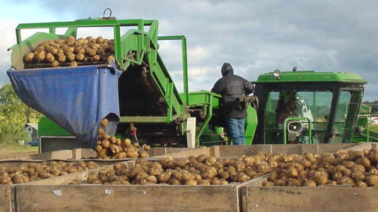 Climate Change Threatens Potato Chip Production, Global Food Storage