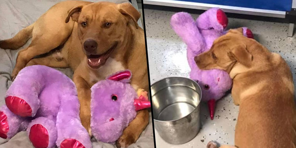 Stray Dog Who Stole Purple Unicorn 5 Times From Dollar Store Finally Has It Bought for Him