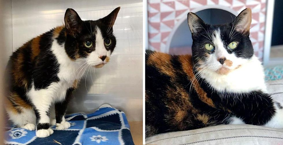 17 Year-old Cat Given Up by Family Finds Happiness Again and Hopes for Home to Spend Her Golden Years