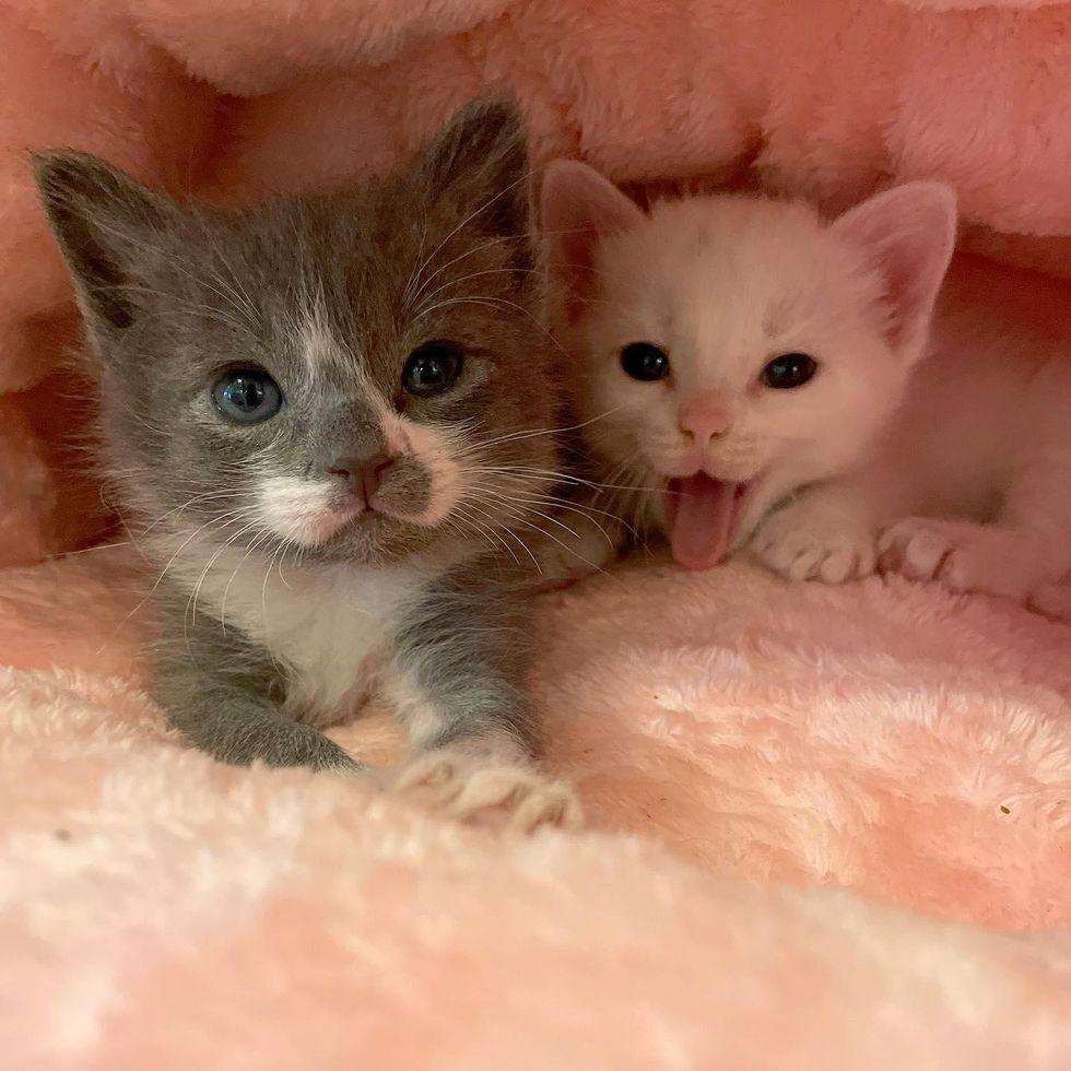 best friends, kittens, brothers, cute, lenny, carl