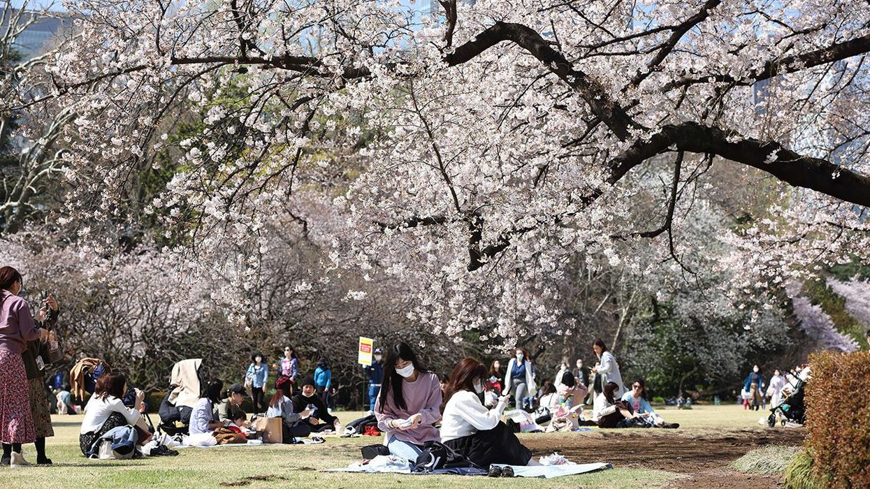 Japan: Earliest Cherry Blossom Season Peak on Record 'Likely Caused' by Climate Change