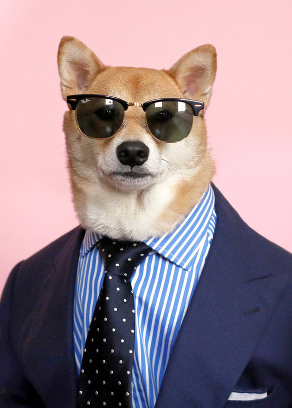 Let The New York Times and this Dog Teach You About Summer Menswear