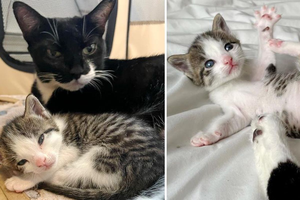 Cat Keeps Her Only Kitten Close Every Step of the Way and Hopes for Family of Their Dreams