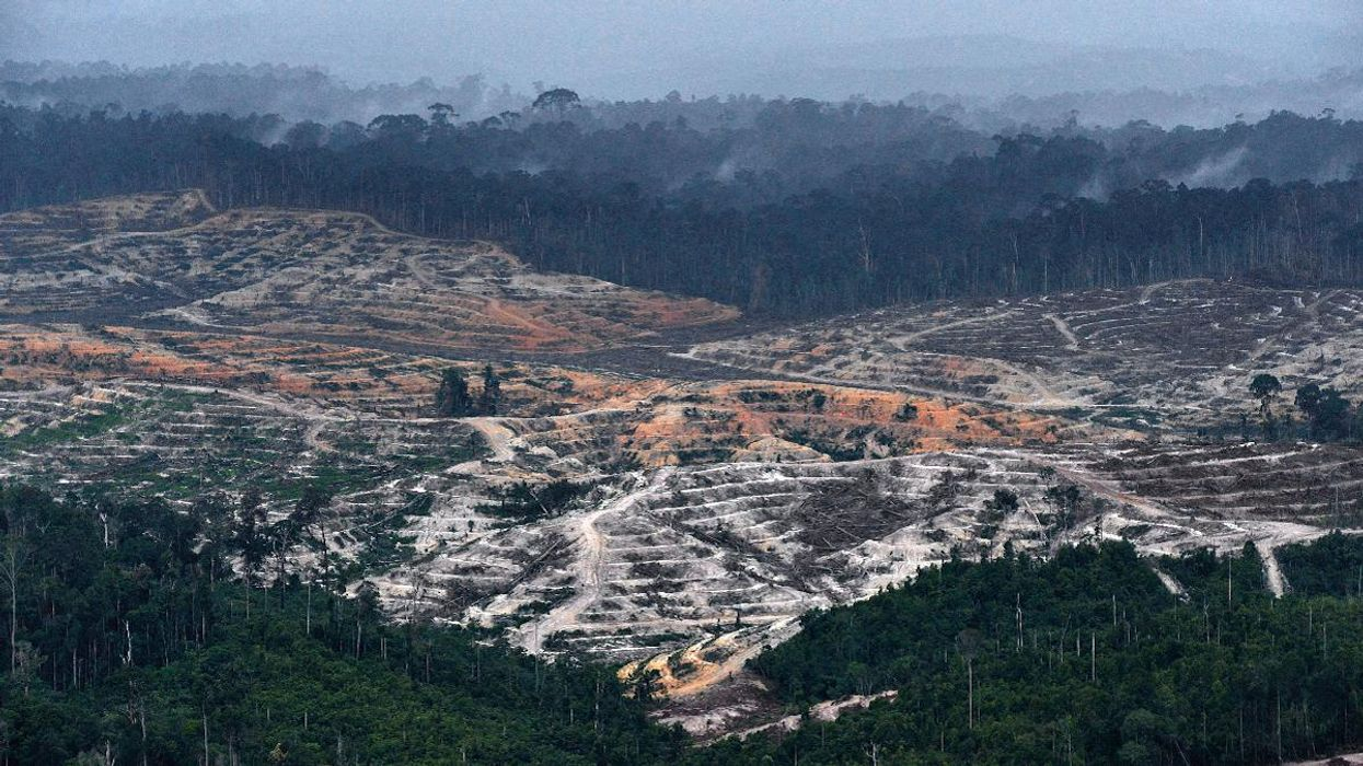 Scientists Highlight Need to Restore Logged Rainforests in a Hotter and Drier Climate