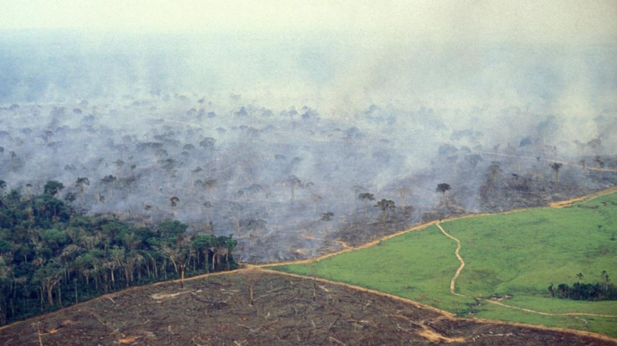 Amazon Rainforest Is Probably Contributing to Climate Crisis, Study Finds
