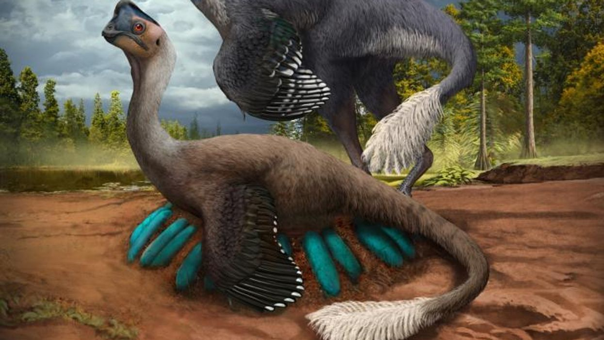 Incredible fossil shows dinosaur sitting on preserved nest of eggs