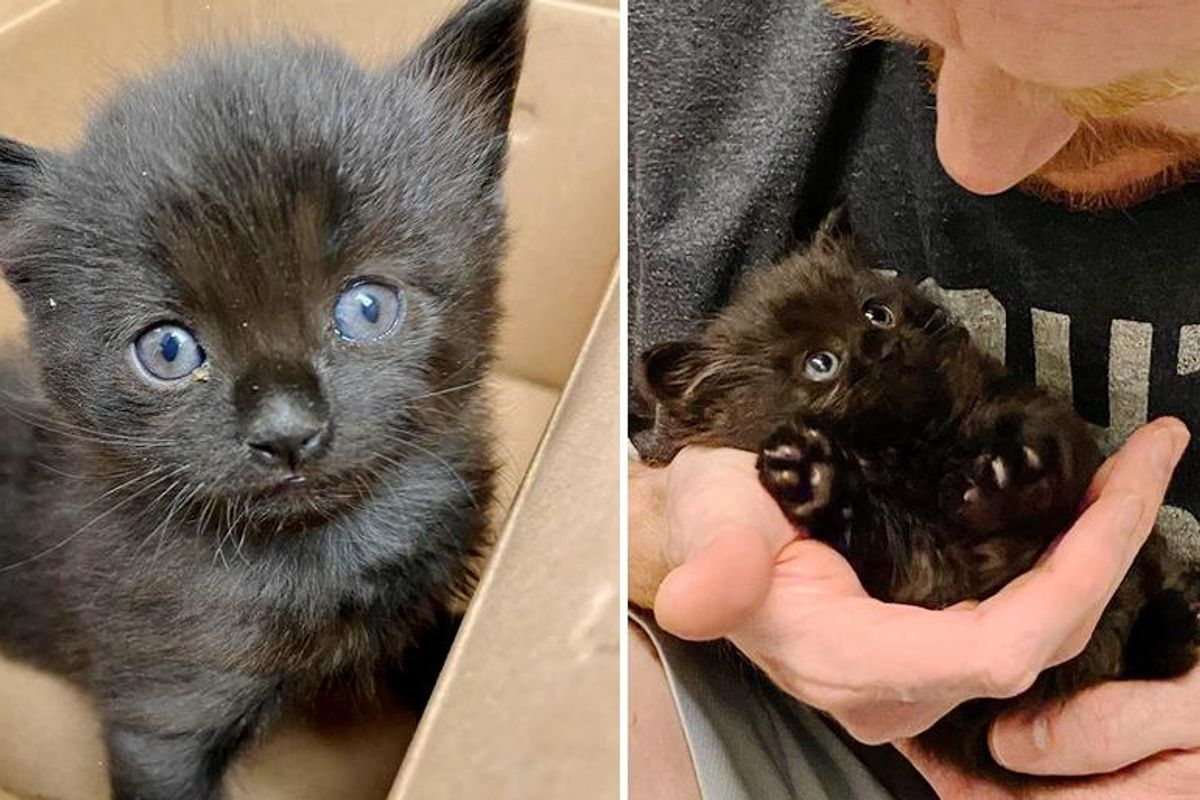 Kitten with Irresistible Face Finds Family to Cater to His Every Need After Being Found Alone