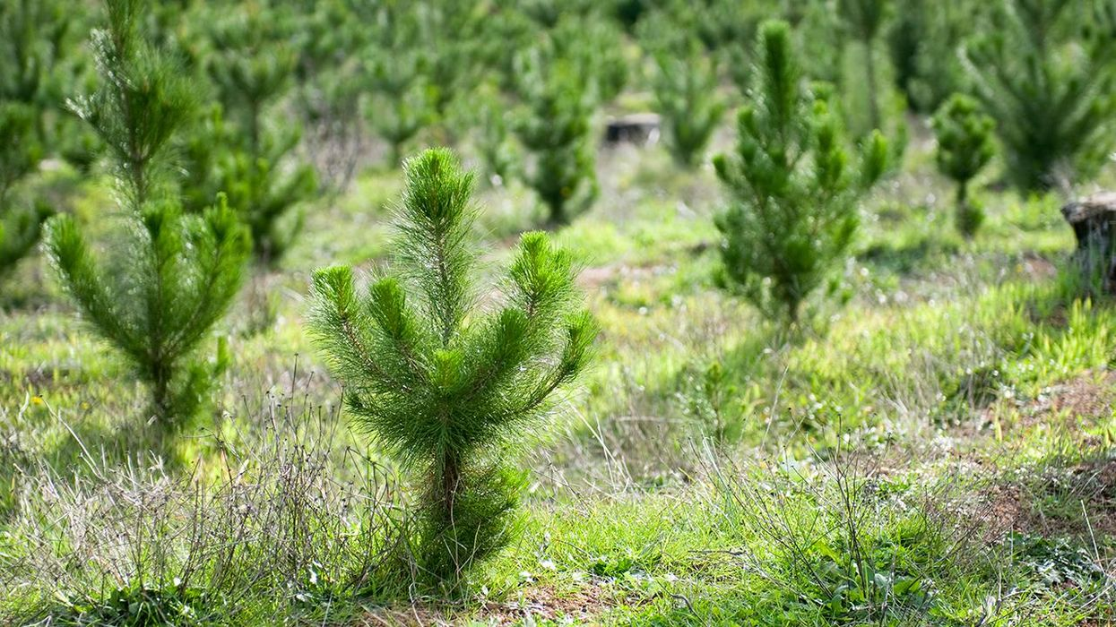 These 10 Golden Rules for Planting Trees Could Help Save the Planet