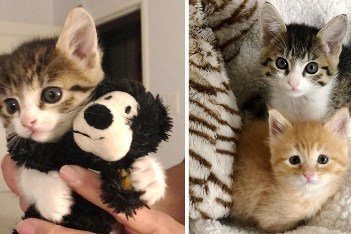 Kittens Found Separately as Orphans, Cross Paths and Become Bonded Friends
