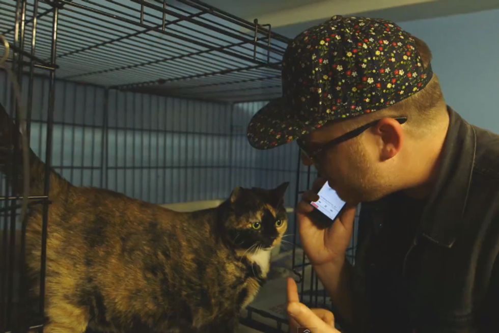 Watch El-P Audition Cats For Meow The Jewels