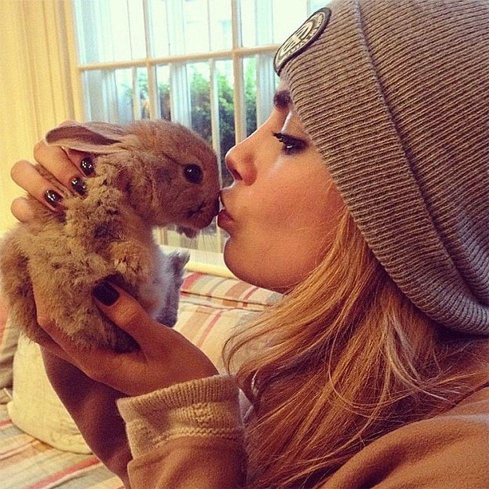 9 Celebrity Pet Social Media Accounts to Follow