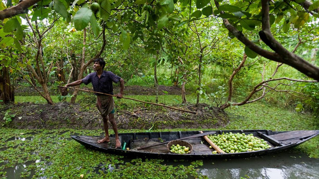 Could Floating Gardens Protect Flood-Prone Communities in Bangladesh?