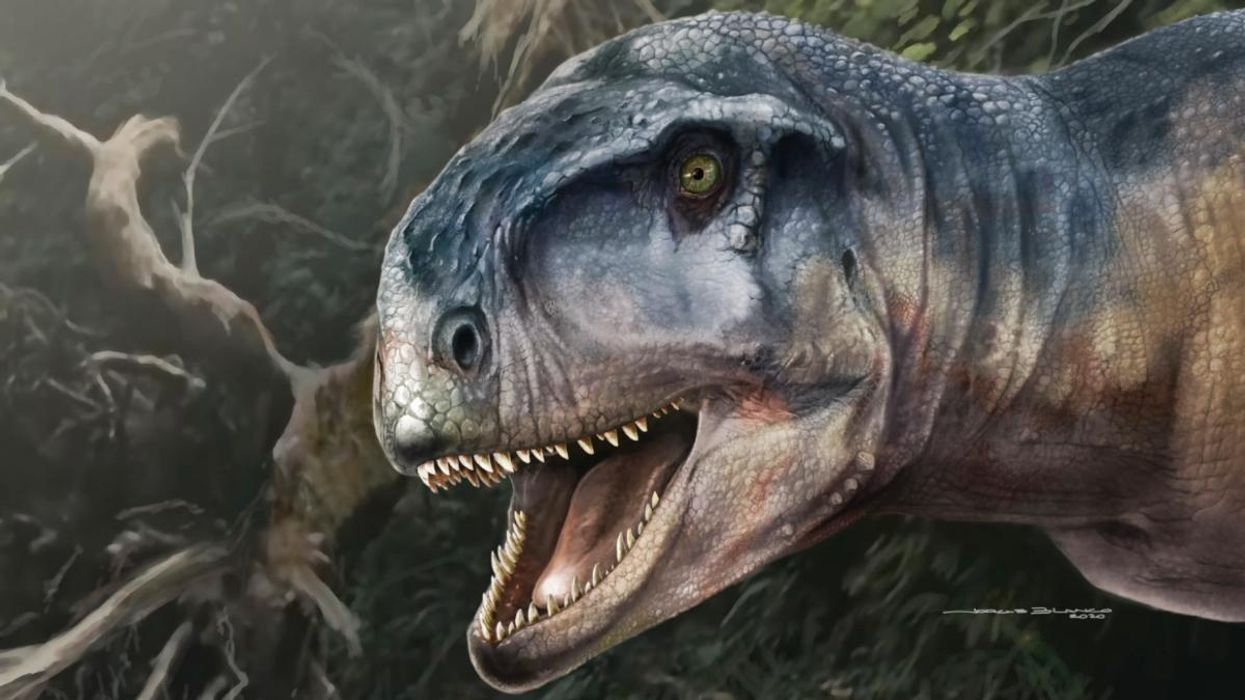 New Predatory Dinosaur Discovered, Named 'One Who Causes Fear'