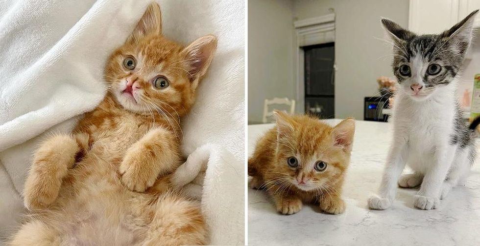Kitten Can't Contain His Excitement After Being Found, Now Has Perfect Companion He Always Wanted