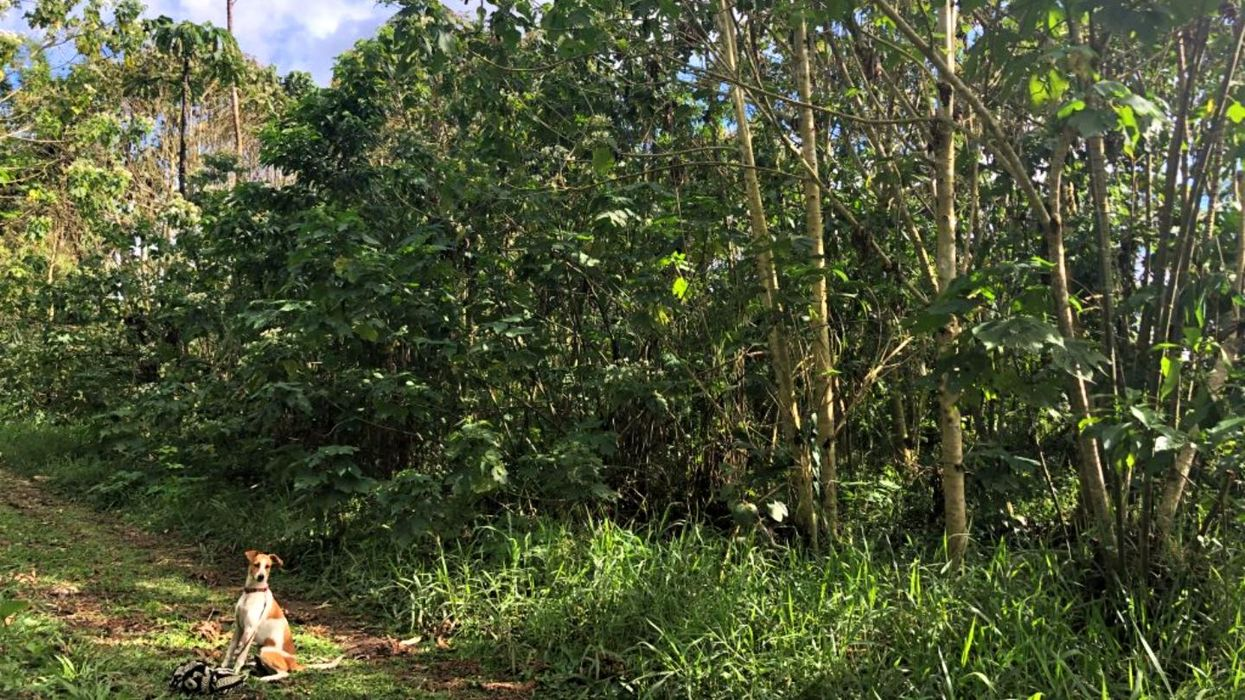 How your daily coffee can help tropical forests grow back
