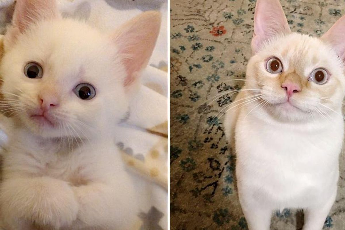 Family Nursed Kitten Back to Health, He Turns Out to Be the Cat They Never Knew They Were Missing