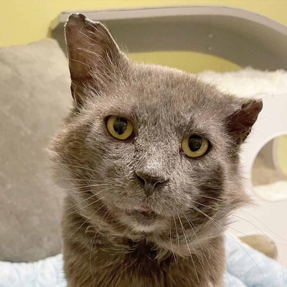 Mason, cat, tough look, rescue