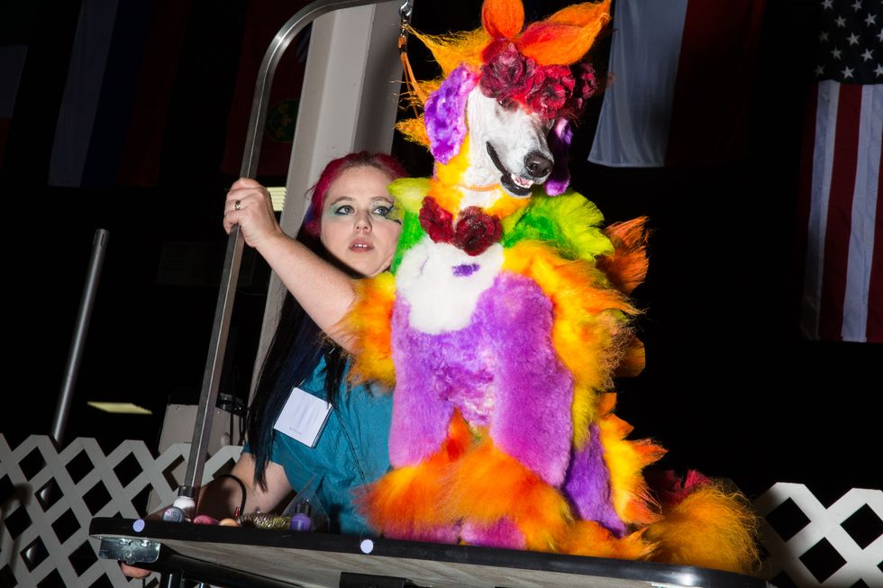 Insane Photos From a New Jersey Dog Grooming Competition
