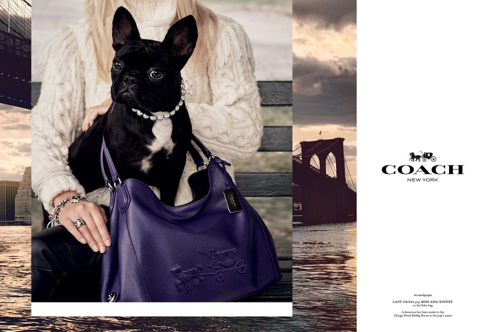 Coach's New Campaign Stars Celebrity Dogs
